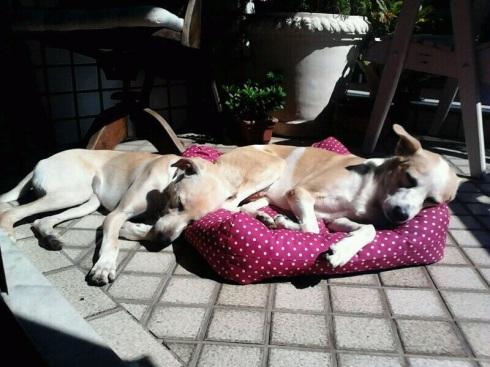 Kate dormindo com o irmão Snoopy. Quem diria?!