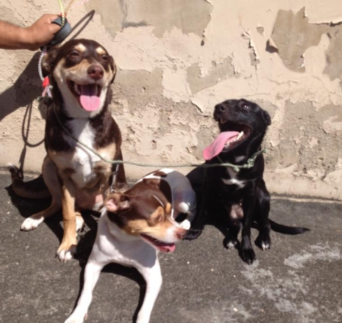 Lux com seus irmãos caninos