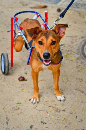 Valente é um cão especial que procura uma familia! ADOTE!
