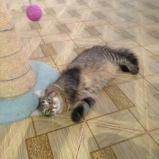 Feliz o gato-cão PARA ADOÇÃO